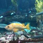 Monterey Bay Aquarium Foto