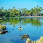 Large natural lagoons on the property[.