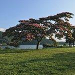 湖畔に綺麗で不思議な花(ホウキみたい)を付けた気を見つけました。後で調べたら、この木「ネムノキ」でした。ネムノキは夏の季語だそうですよ!