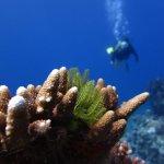 Photo of Blue Dive Port Douglas