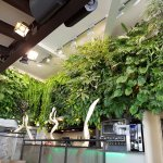 Notre mur végétal vu du bas