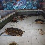 gestresste dieren; bezoekers mogen ze vastpakken voor op de foto