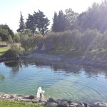la piscine naturelle en lagunage
