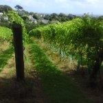 Foto di Polgoon Vineyard & Orchard, Vineyard Shop and Vine House Kitchen
