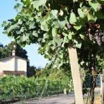 Zicht op Agriturismo Ca del Ferro vanuit de wijngaarden