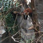 Photo of Minnesota Zoo