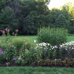 One of the wildflower gardens near the frog pond and rose garden.