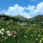 Wildflower Meadow below Linkins Lake