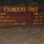 Incredible redwoods.