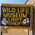 Wildlife Museum & Gift Shop