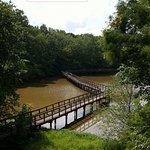 Cypress Grove Nature Park Foto