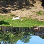 Animals at farm