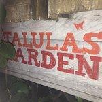 Photo of Talula's Garden