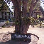 Photo de Kaluku Gili Resort