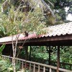 Pachira Lodge Photo