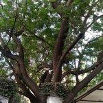 Olive nestled among the trees