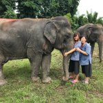 with the gentle elephants!