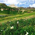 Lots of wild flowers on this hike, Wetterhorn in the background