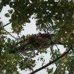 Sloth sleeping in tree