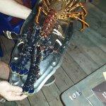 langouste et homards sur commande