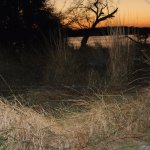 Sunrise over the Chobe