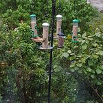 The bird feeders