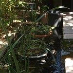 Un petit bassin pour une note de fraîcheur