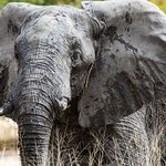 Photo de Moremi Wildlife Reserve