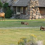 Photo of Yellowstone's Absaroka Lodge
