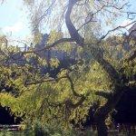 Lismore castle and Gardens