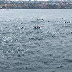 Foto de Dana Wharf Whale Watching & Sportfishing