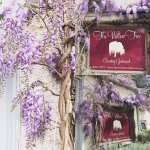 Wysteria at The Willow Tree