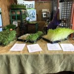 Zdjęcie Yellow Green Farmers Market
