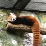 Photo de Kansas City Zoo