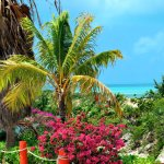 A riot of colours with turquoise ocean and brilliant bouganvillea