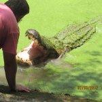 Photo de Kliebert's Turtle & Alligator Farm