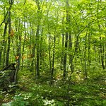 Escarpment forest