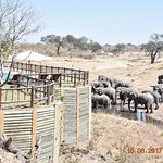 Belmond Savute Elephant Lodge Foto