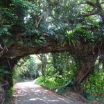 Arch of the Banyan Tree
