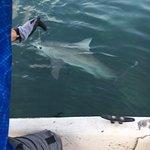 Photo de Sea Dog Fishing Charters
