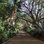 A beautiful walkway on the way to the Boomslang