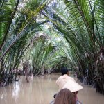 rowing along the tributaries, covered over with palms