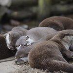 Foto de Tamar Otter and Wildlife Centre