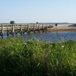 great path and beach area at nearby Sandy Neck Beach to walk your dog and enjoy nature, sand dun