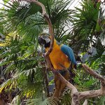 Blue & Gold Macaw at Bloedel Conservatory