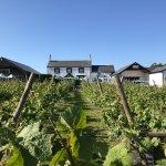 Llanerch Vineyard Farmhouse