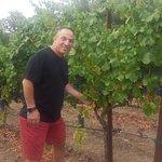 Villagio Vineyards