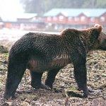 Great Bear Lodge 사진