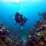 diving in one of the many beautiful reef areas