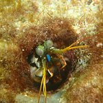 Photo of Scandi Divers